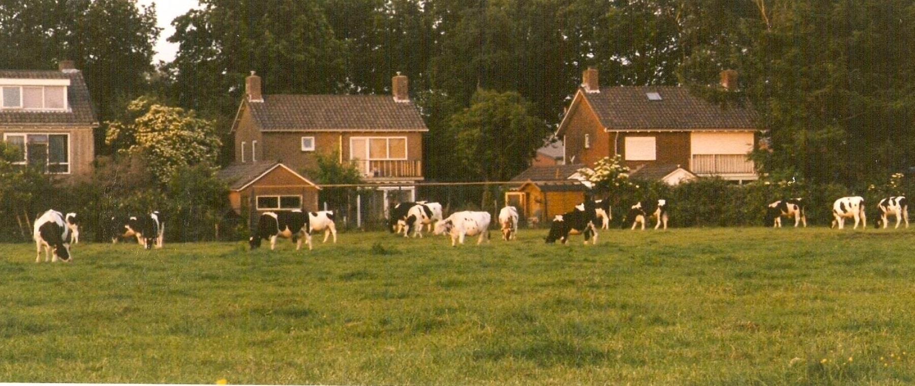 Vroeger stonden er koeien